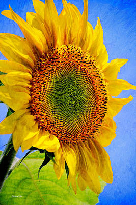 Sunflower Mixed Media - Sunflower Plant by Christina Rollo