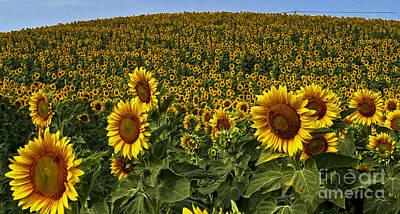 Sunflower Hill Original by Jon Cretarolo