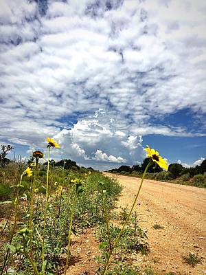 Photograph - Sunflower Hitchhikers by Brad Hodges