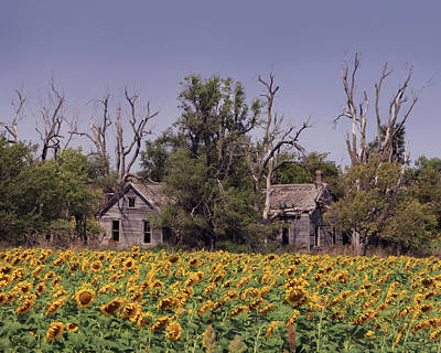 Photograph - Sunflower House by Christopher McKenzie