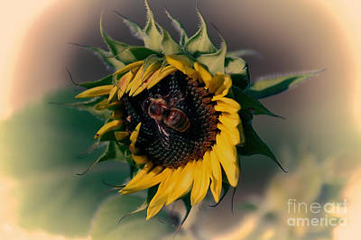 Photograph - Sunflower Hug by Erica Hanel