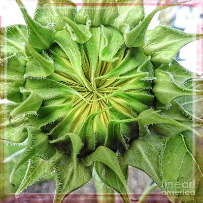 Photograph - Sunflower - I See The Sun by Ella Kaye Dickey