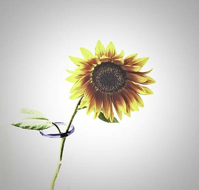 Photograph - Sunflower In A Clear Vase by Zilpa Van der Gragt