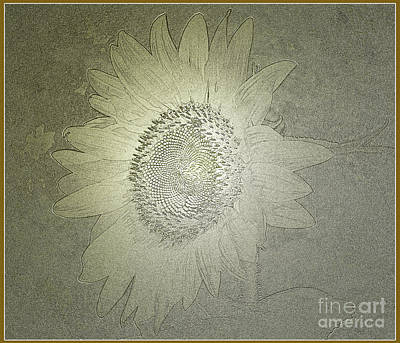 Photograph - Sunflower In Antique Gold by Donna Brown