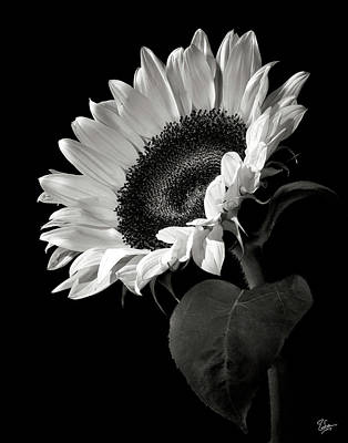 White Flower Photograph - Sunflower In Black And White by Endre Balogh