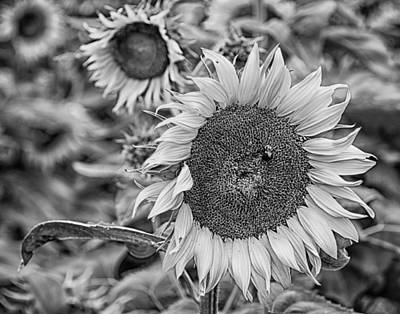 Photograph - Sunflower In Black And White by Leah Palmer