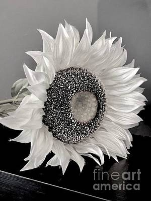 Photograph - Sunflower In Monocrome by Jeannie Rhode