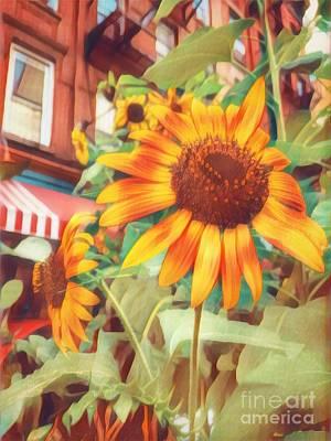 Photograph - Sunflower In New York - Summer Beauty by Miriam Danar
