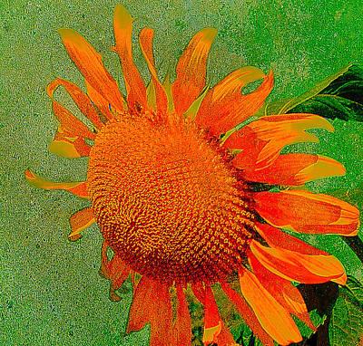 Photograph - Sunflower In Orange by Kathleen Stephens