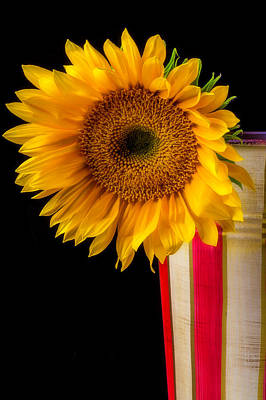 Flower Photograph - Sunflower In Striped Container by Garry Gay
