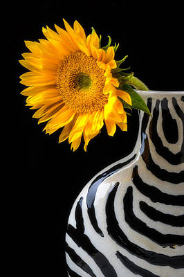 Flower Photograph - Sunflower In Striped Vase by Garry Gay