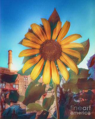 Photograph - Sunflower In The City - Urban Beauty by Miriam Danar