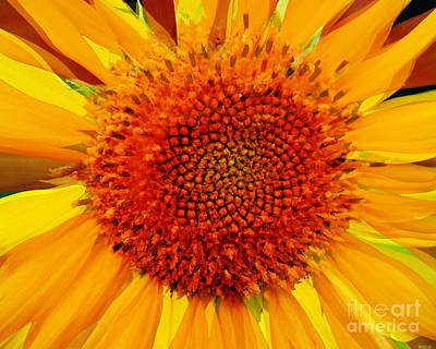 Photograph - Sunflower In The Sun by Lizi Beard-Ward