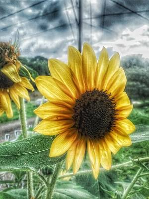 Photograph - Sunflower In Town by Dustin Soph