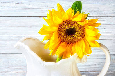 Photograph - Sunflower In White Pitcher by Garry Gay