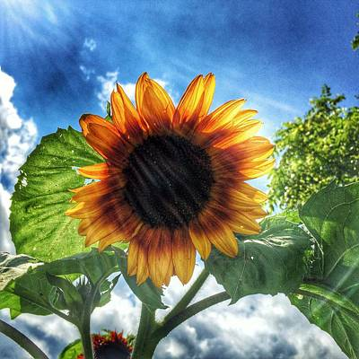 Art Print featuring the photograph Sunflower by Jame Hayes