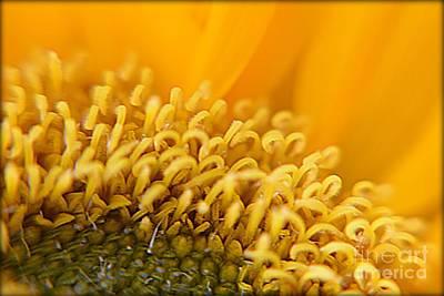 Photograph - Sunflower by Janice Spivey
