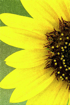 Photograph - Sunflower by Joe Paul