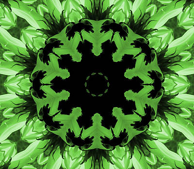 Photograph - Sunflower Kaleidoscope In Green by Aimee L Maher ALM GALLERY