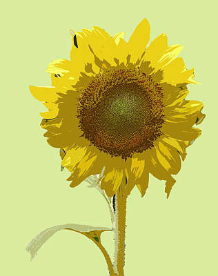 Digital Art - Sunflower by Karen Nicholson