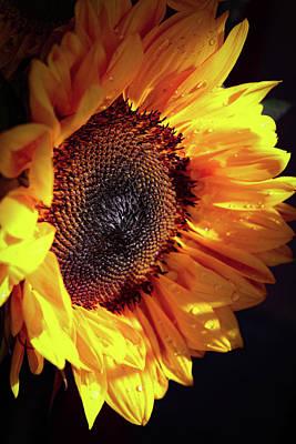 Photograph - Sunflower by Karen Ruhl