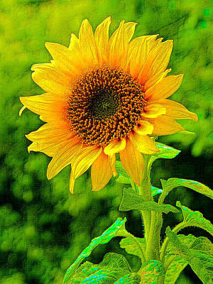 Sunflower Art Print by L Brown
