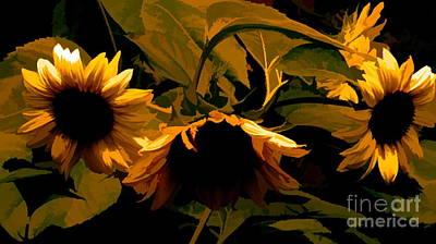 Photograph - Sunflower Light by Scott Harrison