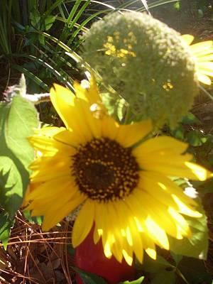 Sunflower Light Original