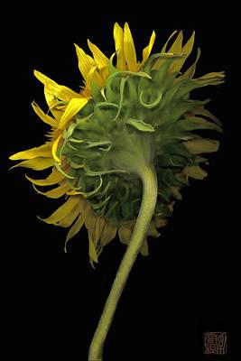 Sunflower Art Print by Lloyd Liebes
