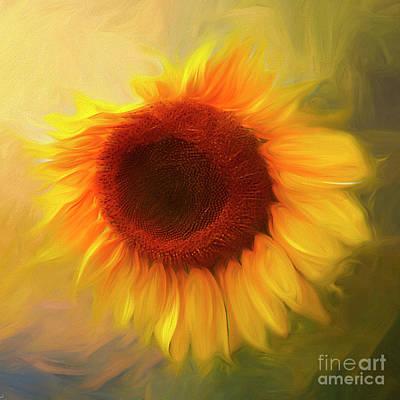 Photograph - Sunflower Love 2 by Darren Fisher