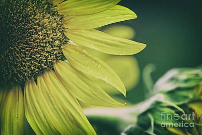 Photograph - Sunflower Love by Scott Pellegrin