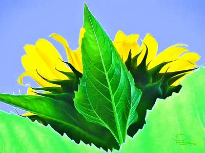 Photograph - Sunflower by Ludwig Keck