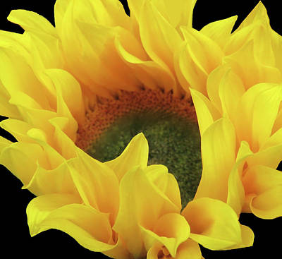 Photograph - Sunflower Macro by Johanna Hurmerinta
