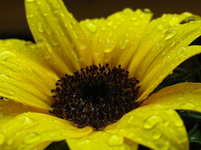 Abstrac Photograph - Sunflower Macro by Juergen Roth