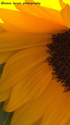 Photograph - Sunflower Macro by Nance Larson