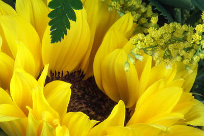 Botanical Photograph - Sunflower Macro by Tom Mc Nemar