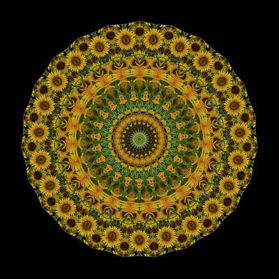 Sunflowers Royalty-Free and Rights-Managed Images - Sunflower Mandala by Mark Kiver