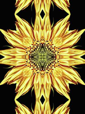 Photograph - Sunflower Manipulation  by Karen Stahlros
