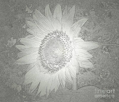 Photograph - Sunflower Metallic Silver Glow by Donna Brown