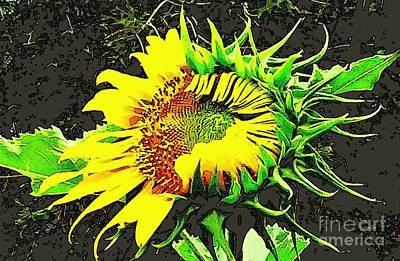 Photograph - Sunflower Metamorphous by Michael Hoard