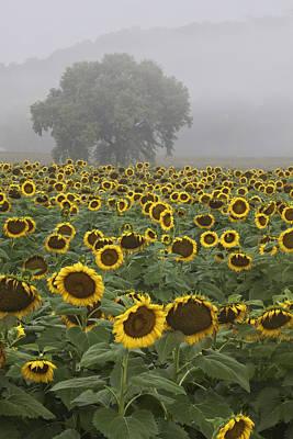 Sunflower Morning Vertical Art Print by Rob Travis