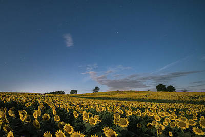 Photograph - Sunflower Nights by Ryan Heffron