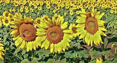 Photograph - Sunflower Nirvana 27 by Allen Beatty