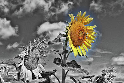 Photograph - Sunflower Nirvana 4 by Allen Beatty