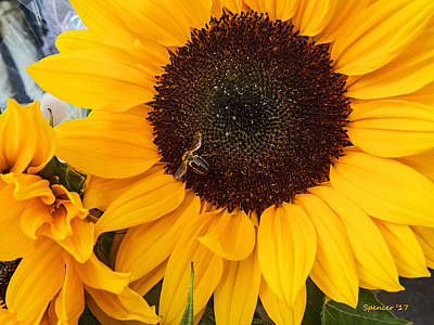 Photograph - Sunflower Of France by T Guy Spencer