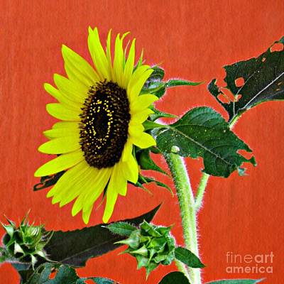Cactus - Sunflower on Red 2 by Sarah Loft
