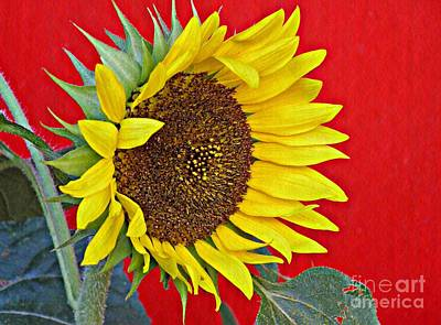 Photograph - Sunflower On Red by Sarah Loft