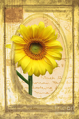 Sunflower On Vintage Postcard Art Print by Nina Silver