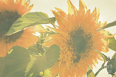 Fields Of Flowers Photograph - Sunflower Pair by Ana V Ramirez