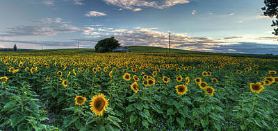 Flower Blooms Photograph - Sunflower Panorama by Mark Kiver